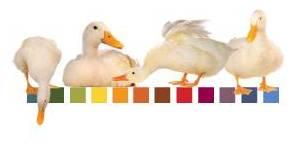 Jontys Duck lineup